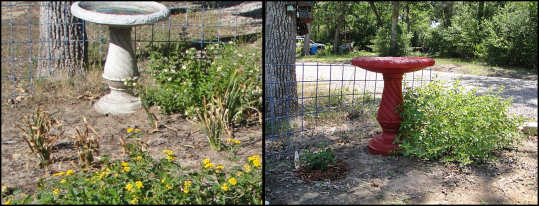 Before after bird bath red