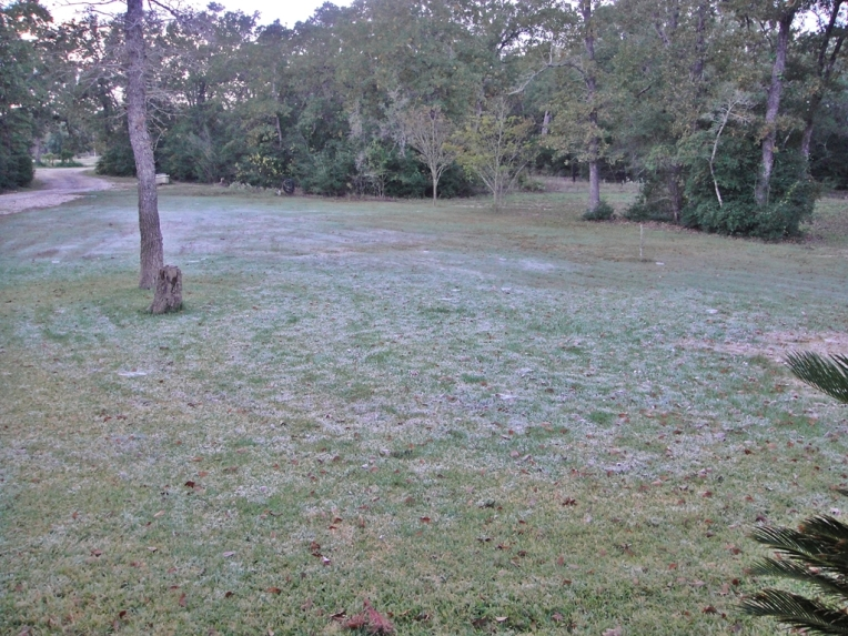 Jack Frost visited last night!