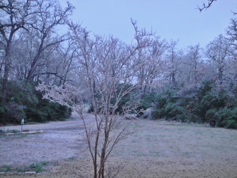 Ice on Crepe Myrtle