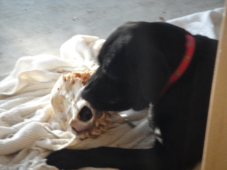 Remi and her mystery skeleton